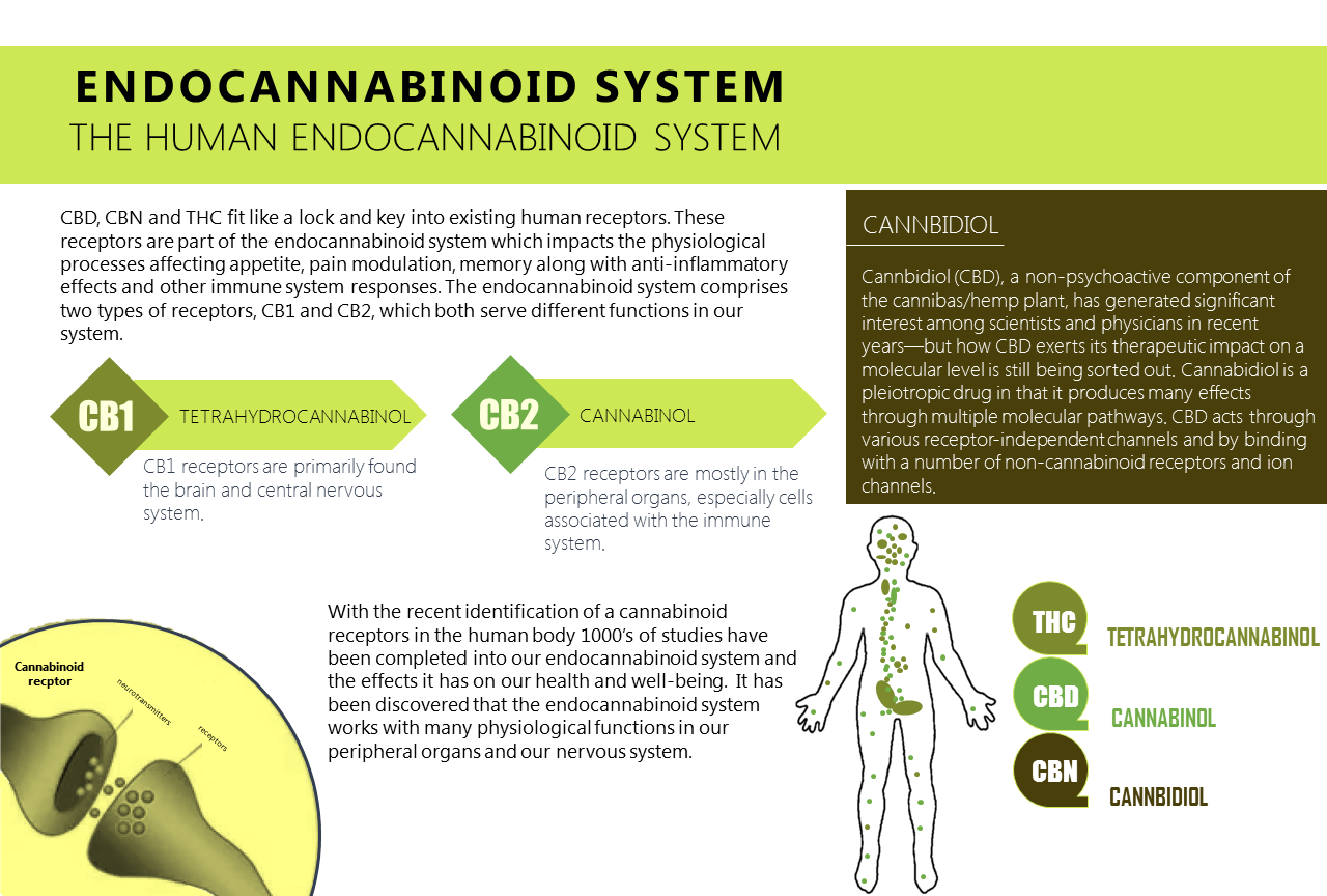 explaining cannabinoids